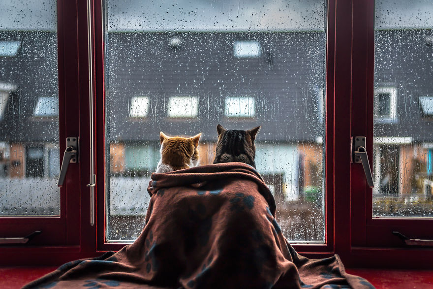 I-Photograph-My-Cats-In-Front-Of-The-Window-Whenever-Its-Raining-58260ebdb2306__880.jpg